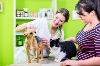 a vet checking her customer pet